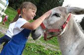 val di fiemme trentino activities workshop kids animals haddocks  | © visitfiemme